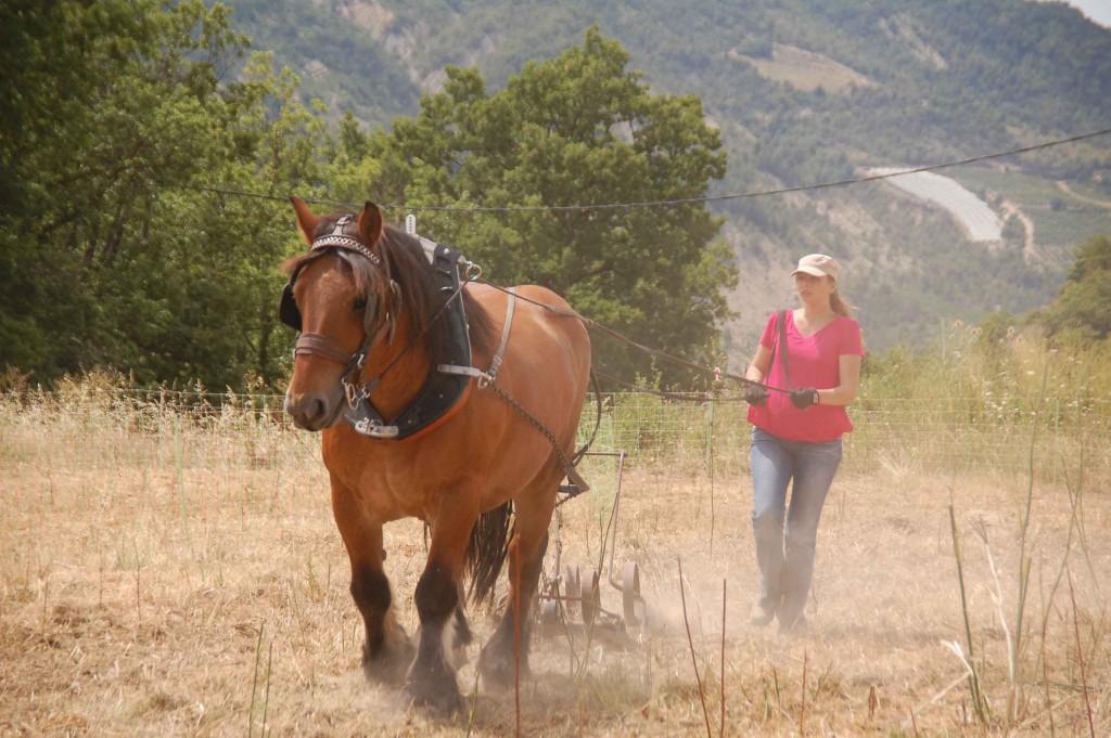 Fête des traditions - Le travail du cheval