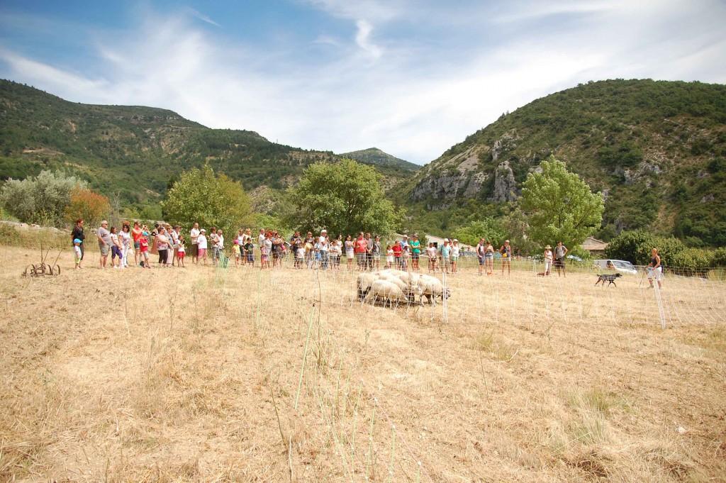 Fête des traditions - Le travail du chien de troupeau