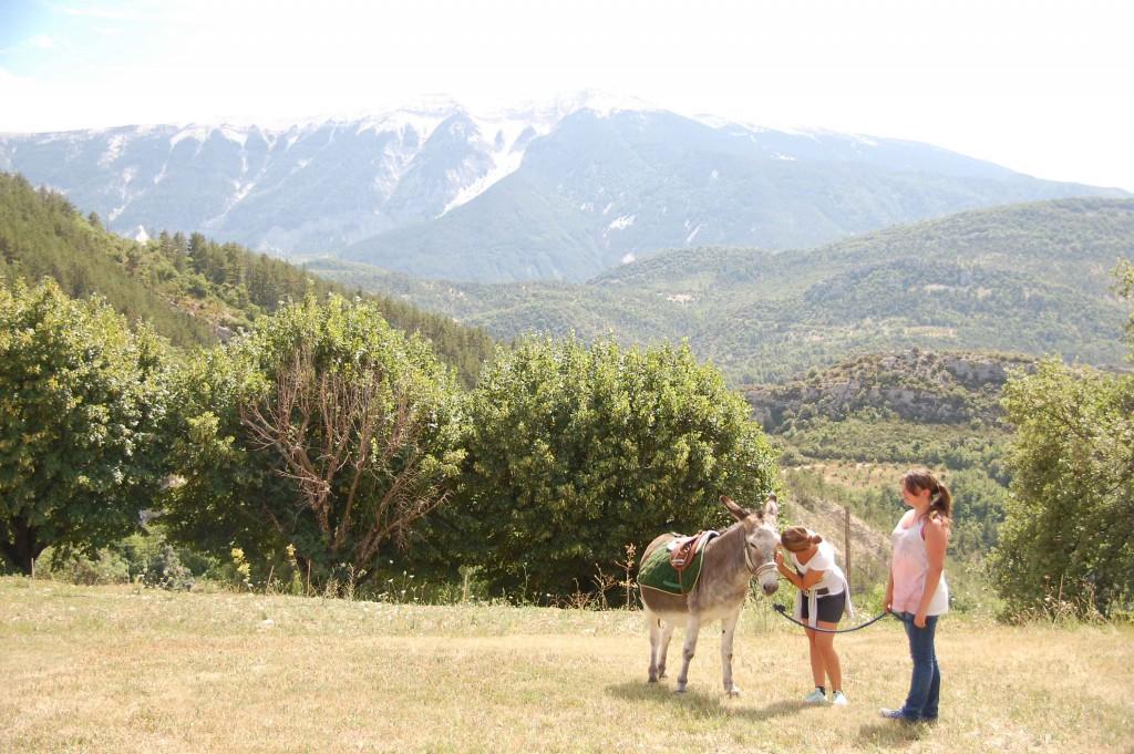Fête des traditions - Les ânes